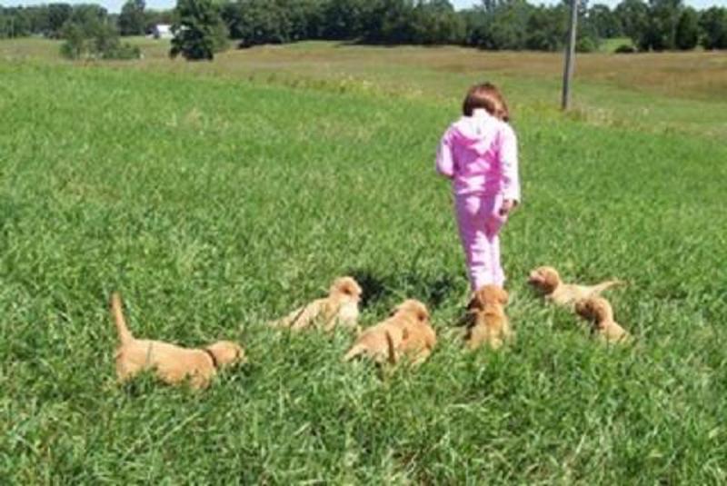 Sienna & Pups