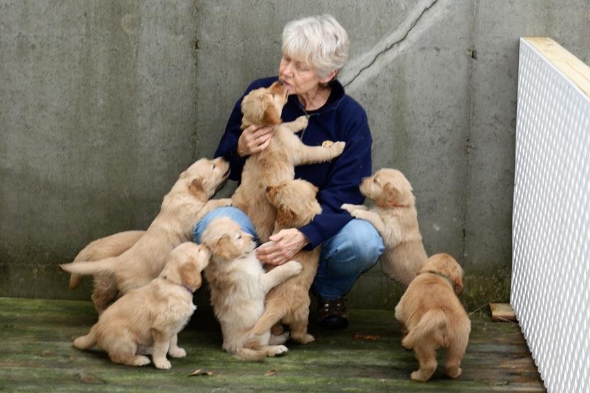 Puppy Inquiry – Wynwood Golden Retrievers